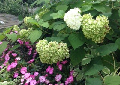 Négy Évszak kert Júliusban - Kertészet Siófok (1)