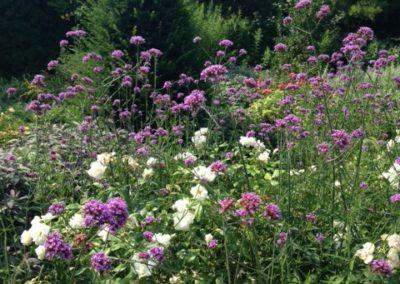 Négy Évszak kert Júliusban - Kertészet Siófok (5)