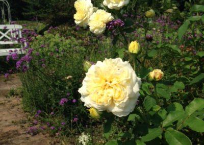 Négy Évszak kert Júliusban - Kertészet Siófok (6)