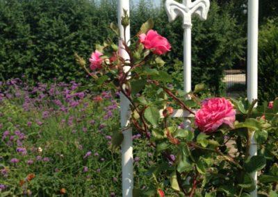 Négy Évszak kert Júliusban - Kertészet Siófok (7)