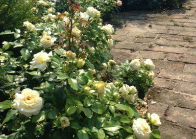 Négy Évszak kert Júliusban - Kertészet Siófok (8)
