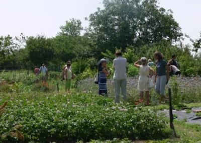 kertnezoben-negy-evszak-kerteszet-siofok-2015 (6)