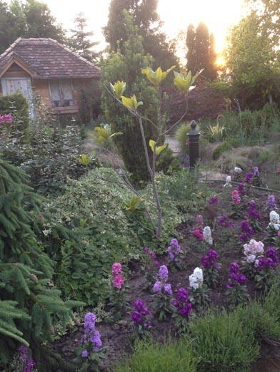 negy-evszak-kerteszet-siofok-bemutato-kert (10)