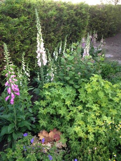 negy-evszak-kerteszet-siofok-bemutato-kert (11)