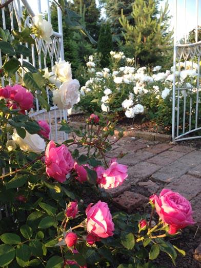 negy-evszak-kerteszet-siofok-bemutato-kert (12)