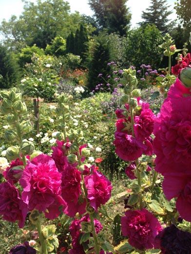 negy-evszak-kerteszet-siofok-bemutato-kert (17)