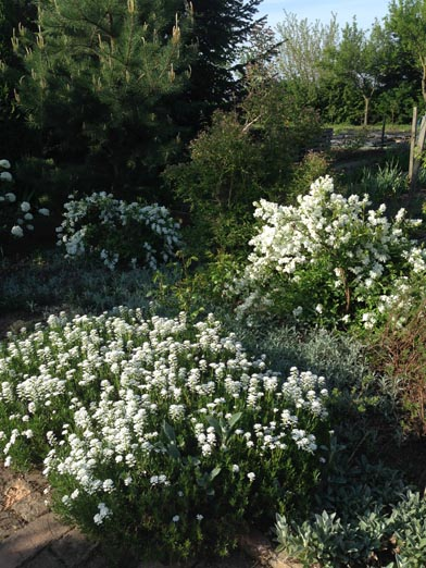 negy-evszak-kerteszet-siofok-bemutato-kert (21)