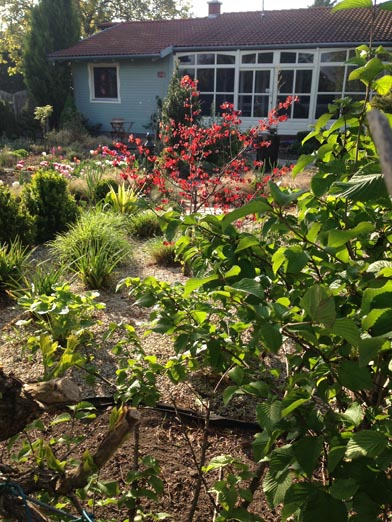 negy-evszak-kerteszet-siofok-bemutato-kert (22)