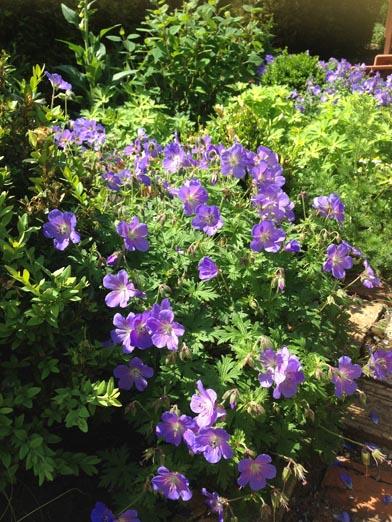negy-evszak-kerteszet-siofok-bemutato-kert (27)