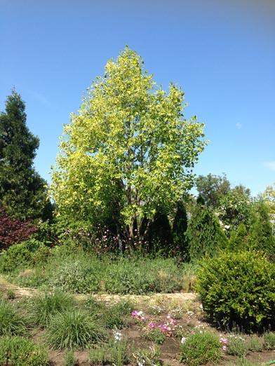 negy-evszak-kerteszet-siofok-bemutato-kert (31)