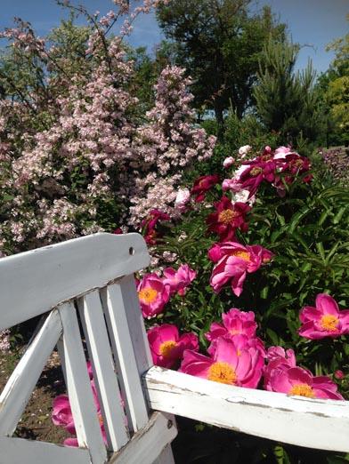 negy-evszak-kerteszet-siofok-bemutato-kert (32)