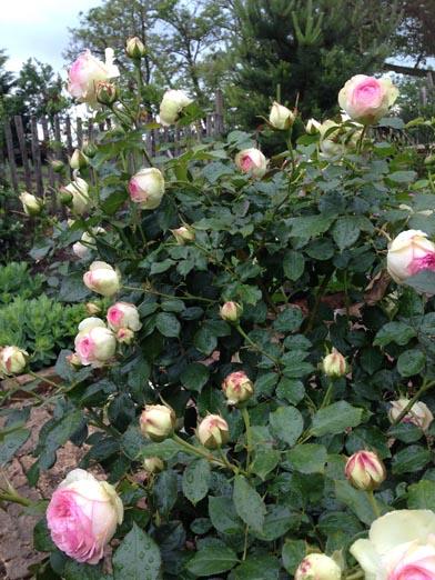 negy-evszak-kerteszet-siofok-bemutato-kert (38)