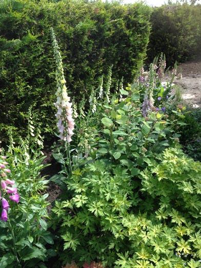 negy-evszak-kerteszet-siofok-bemutato-kert (5)