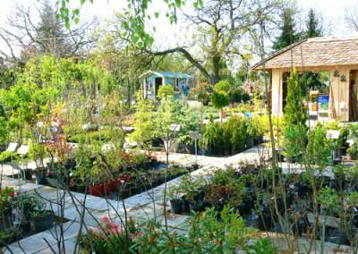 négy-évszak-kertészet-siófok-áruda- (15)