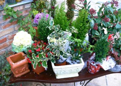 négy-évszak-kertészet-siófok-áruda- (20)
