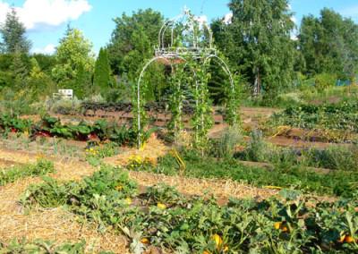 négy-évszak-kertészet-siófok-áruda- (23)