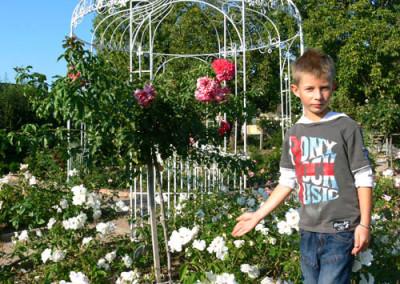 négy-évszak-kertészet-siófok-áruda- (27)