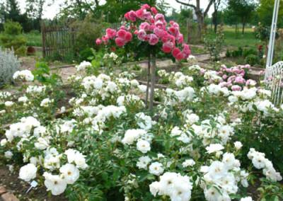 négy-évszak-kertészet-siófok-áruda- (30)
