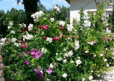 négy-évszak-kertészet-siófok-áruda- (34)