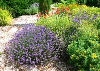 négy-évszak-kertészet-siófok-áruda- (45)