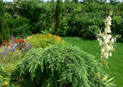 négy-évszak-kertészet-siófok-áruda- (46)