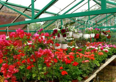négy-évszak-kertészet-siófok-áruda- (5)