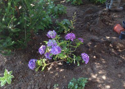 Ház előtti kiskert - Négy Évszak Kertészet Siófok (3)