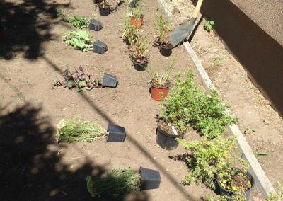 Ház előtti kiskert - Négy Évszak Kertészet Siófok (4)