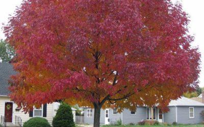 Őszi színek 2. rész
